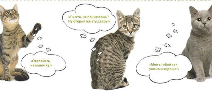 8 основных причин мяуканья кошек