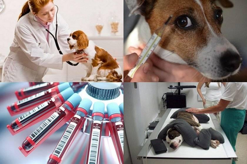 Кашель у животных – статья о лечении животных ивц мва