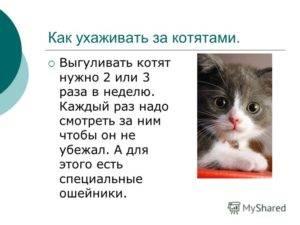 Что нужно для котенка в доме или квартире в первые дни и далее: список всего необходимого, частые ошибки владельцев