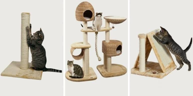 Как приучить взрослую кошку или котёнка к когтеточке