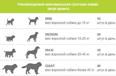 Как правильно организовать прогулку с собакой