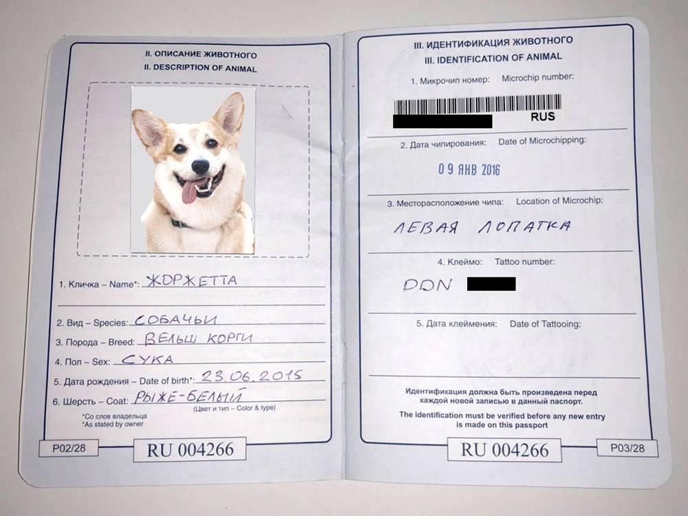 Как сделать паспорт коту или кошке. информация для хозяев