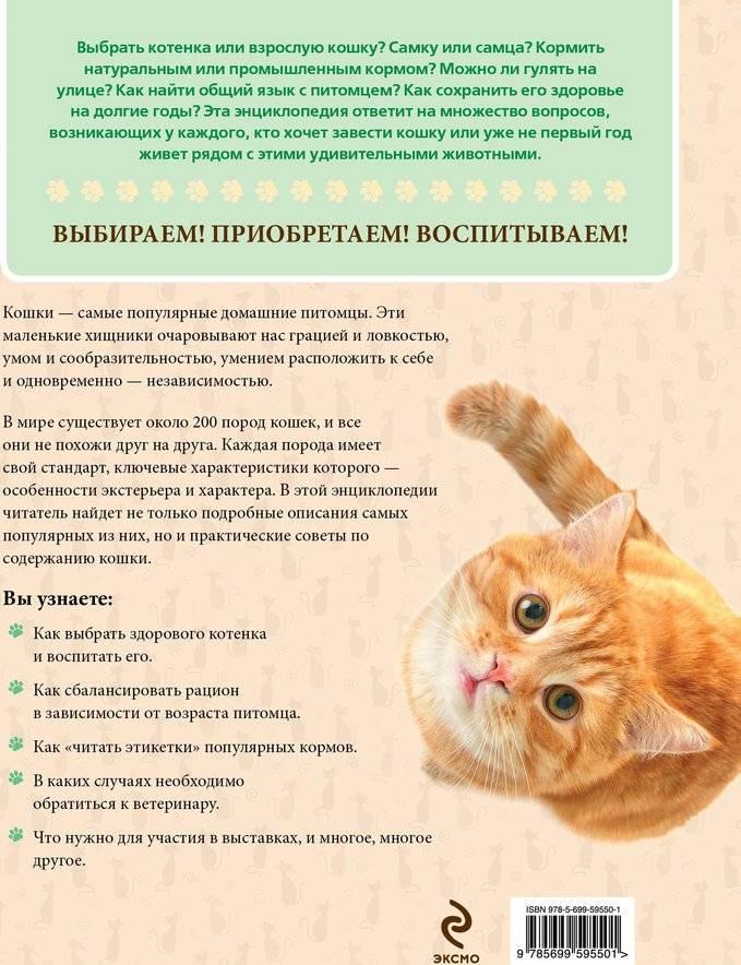 Как правильно выбрать котенка: здорового, хорошего, ласкового, породистого для дома и ребенка