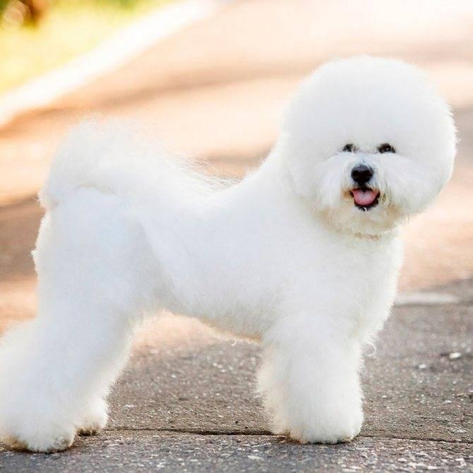 Топ-15 самых добрых пород собак в мире