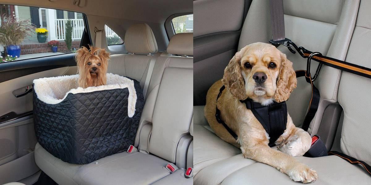 Перевозка собак в машине - инструкция