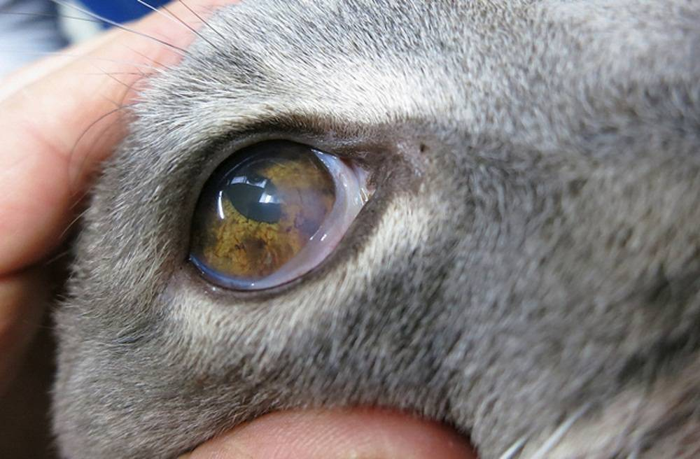Разбираемся в причинах, почему у кота слезятся глаза
