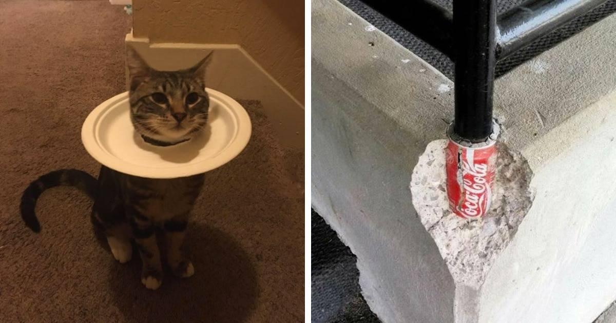 Самые смешные истории про кошек и котов.