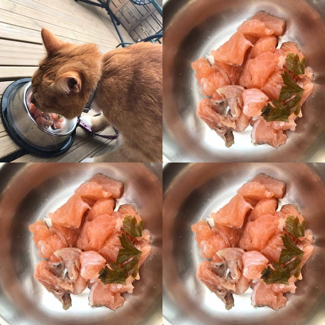 Почему кошки постоянно просят есть, орут, но никогда не наедаются