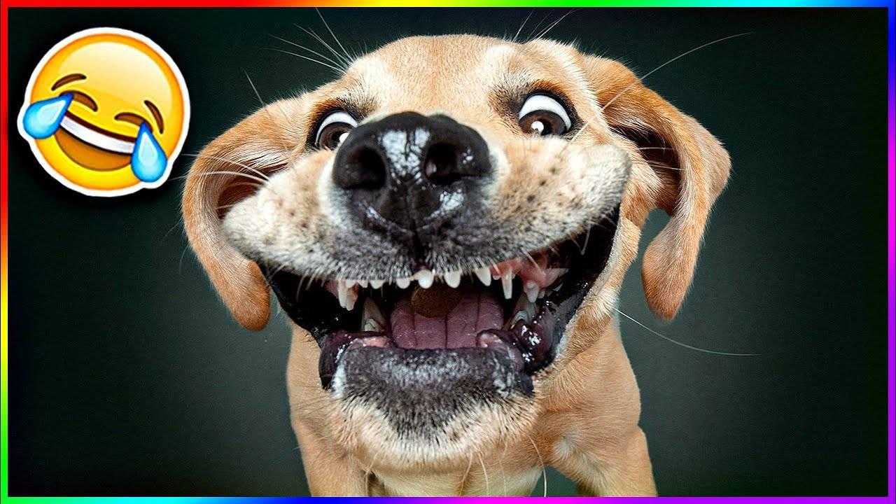 Вопрос: почему кошки не умеют смеяться? - собаки | biologymic.ru