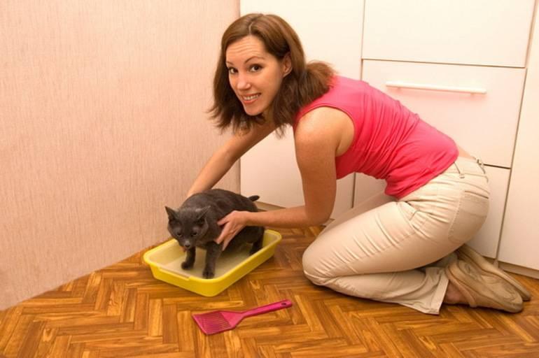 Как заставить кошку перенести котят в другое место