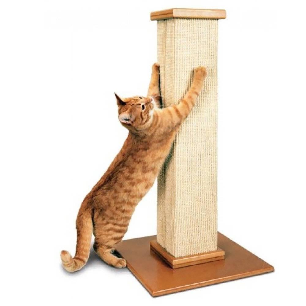 Как приучить кошку к когтеточке, как ее выбрать или сделать своими руками?