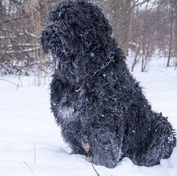Собаки, легко переносящие перепады температур