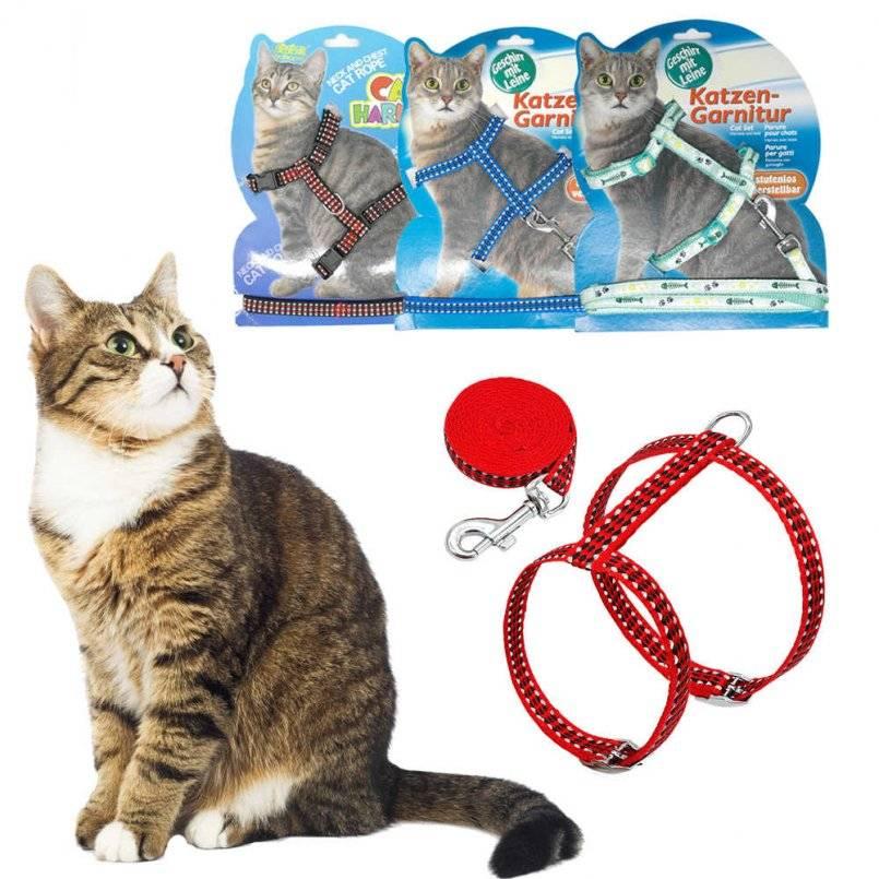Как из веревки сделать шлейку для кошки своими руками | my darling cats