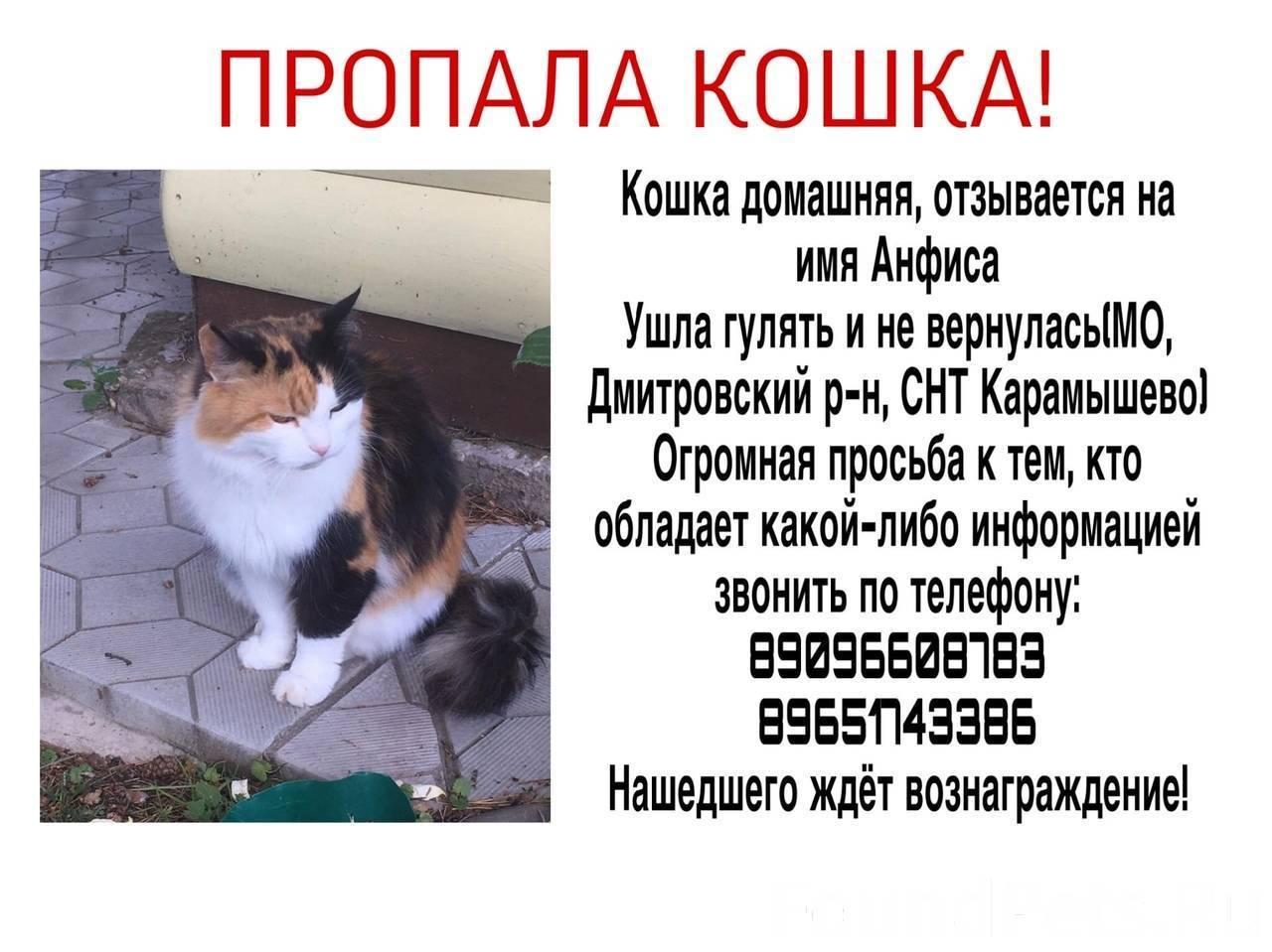 Потерялся кот или кошка: что делать? советы владельцам