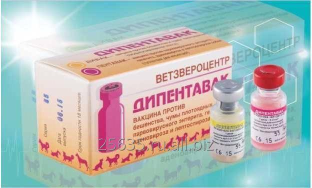 Вакцина дипентавак: инструкция по применению - вет-препараты