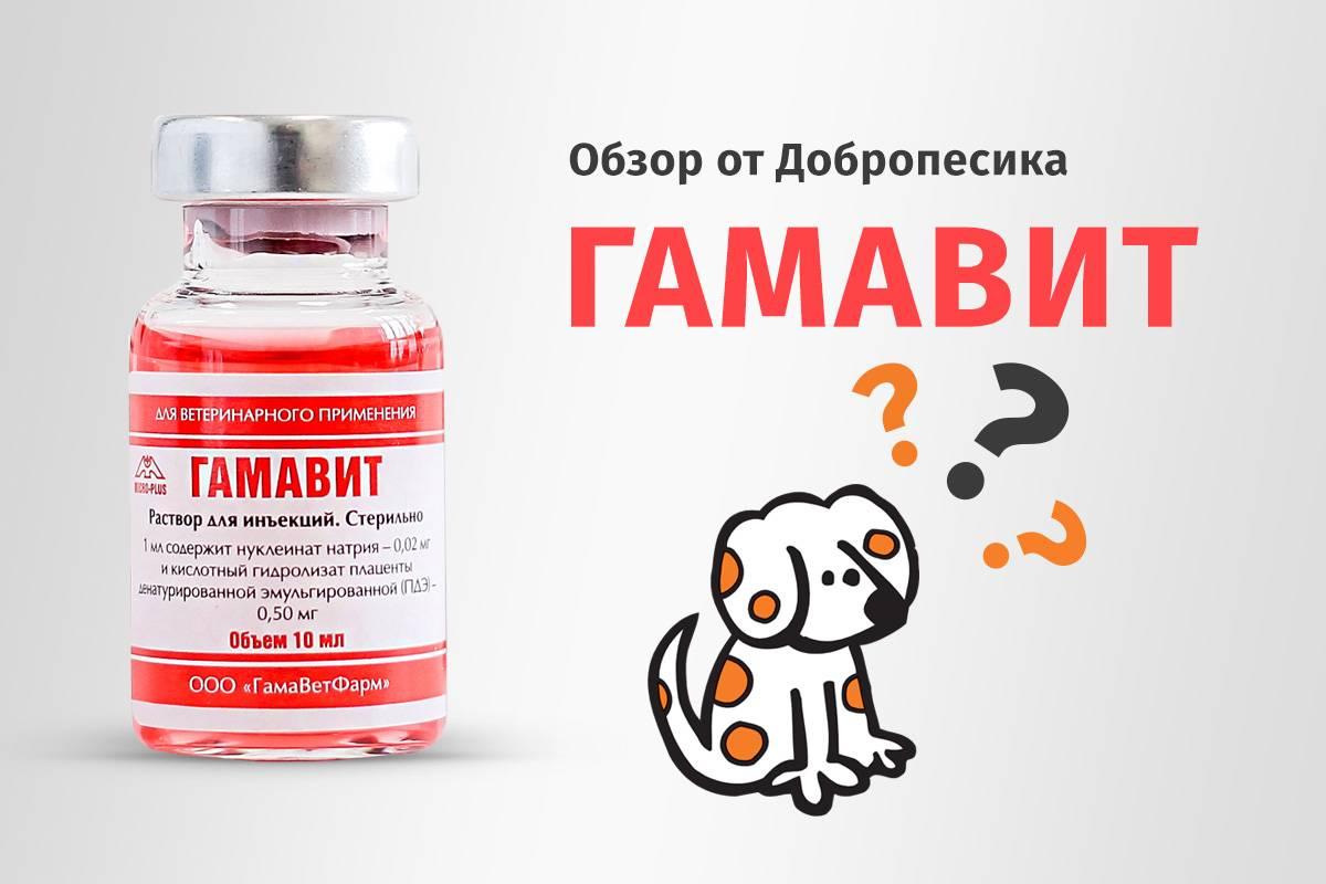 Гамавит для кошек – иммунитет в норме
