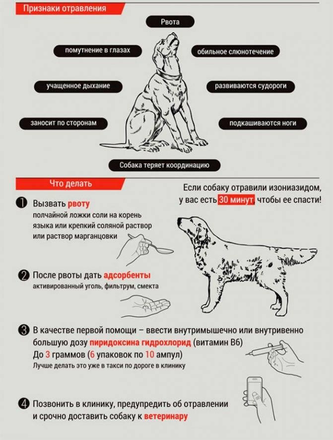 Почему собака икает и что при этом делать почему собака икает и что при этом делать