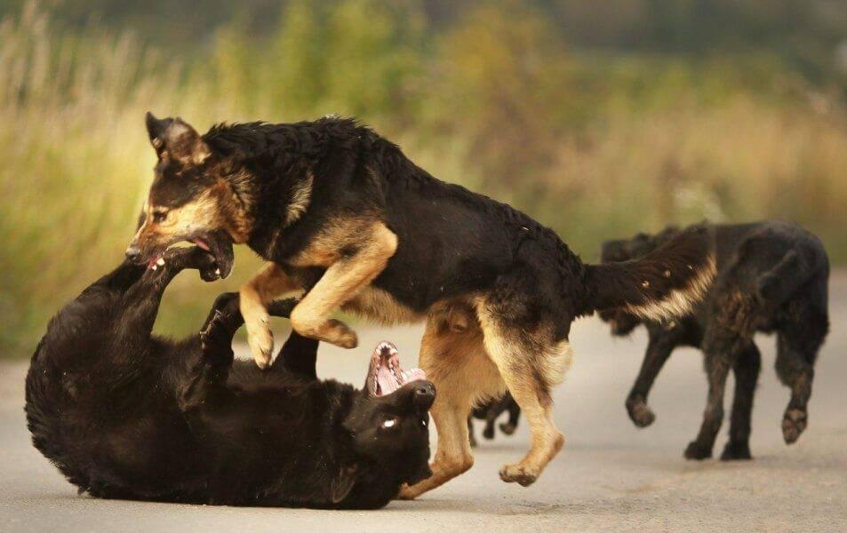 Виды агрессии у собак. часть первая