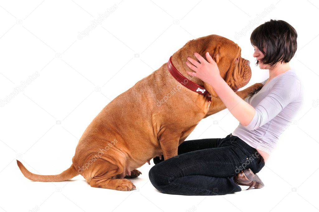 Как отучить собаку прыгать на хозяина: почему собаки так делают?