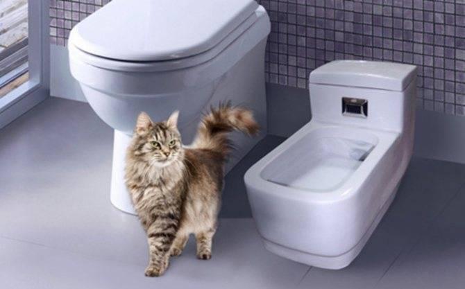 Выбираем биотуалет для кошек – обзор устройств