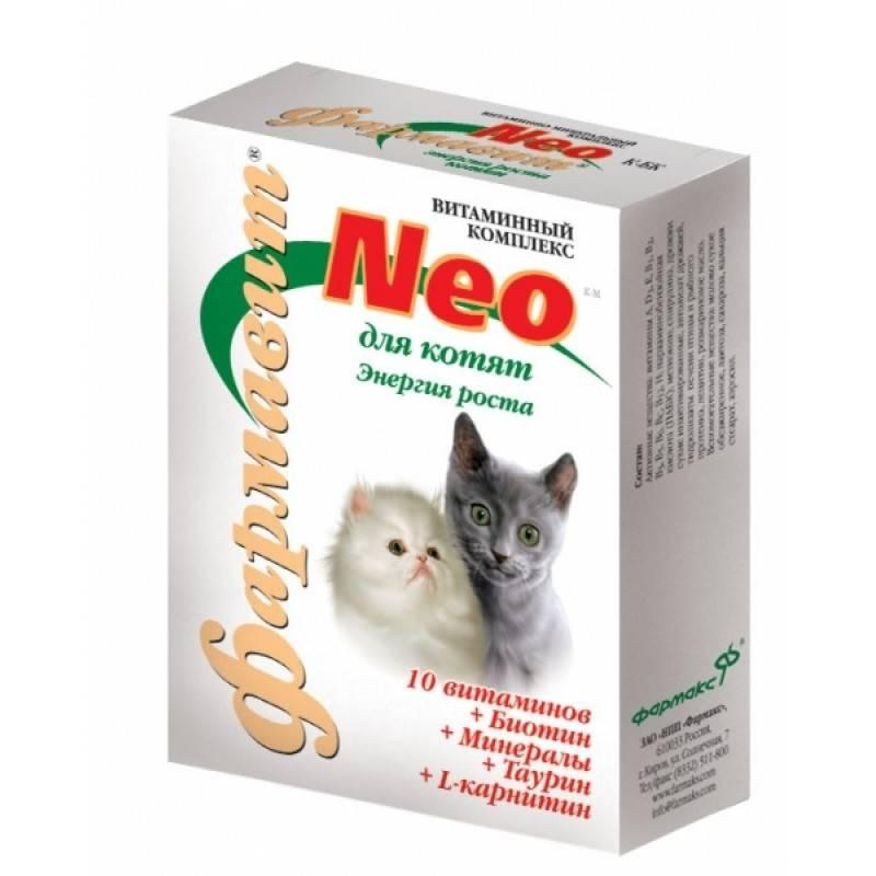 Витамины и минеральные добавки для кошек: нужны ли они