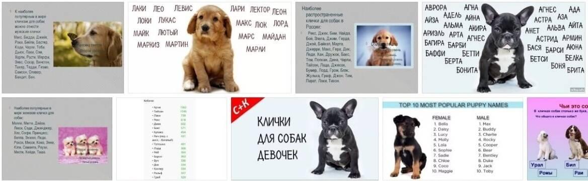Клички для собак мальчиков. как выбрать?