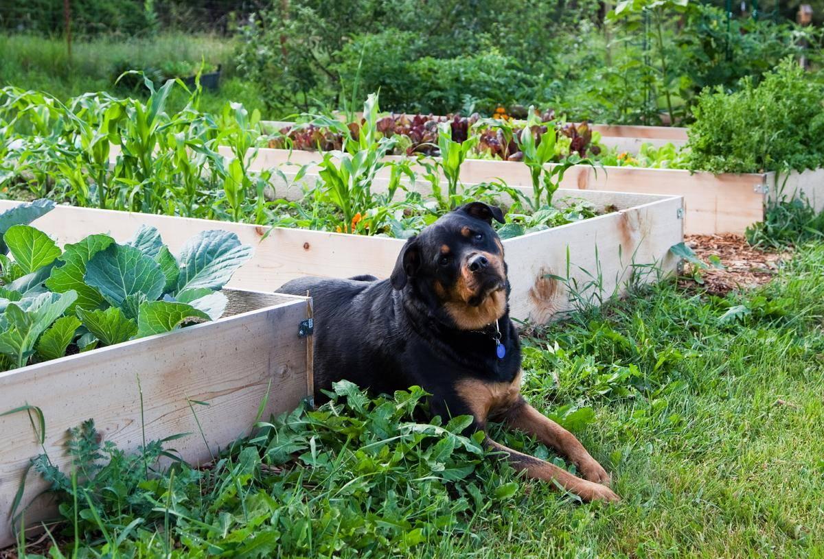 Можно ли хоронить домашних животных в огороде?