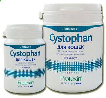 Как давать коту препарат «цистофан»?