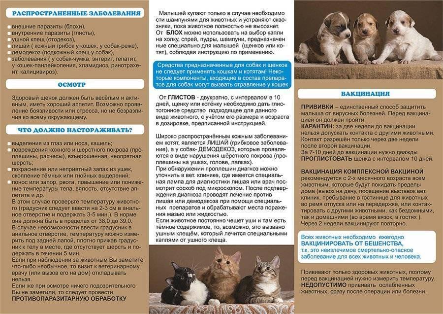 В чем состоит уход за домашними животными?