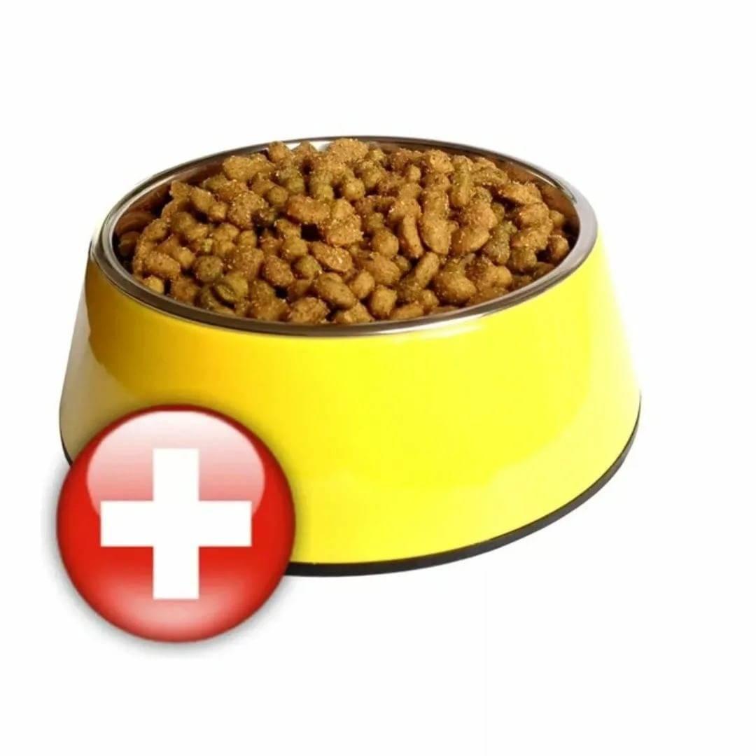 Можно ли кошке молоко, сладкое, кефир, собачий корм, сырое мясо и другие продукты? | hill's pet