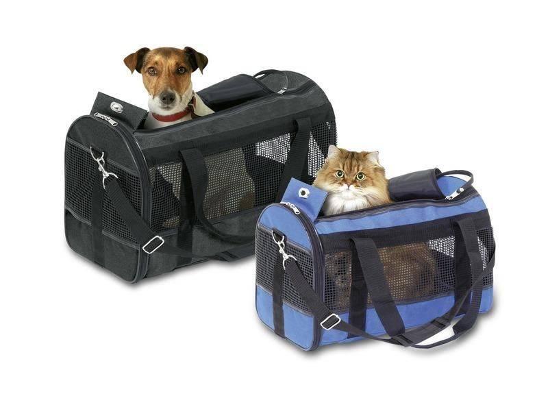 Поездка с кошкой в автомобиле: основные правила
