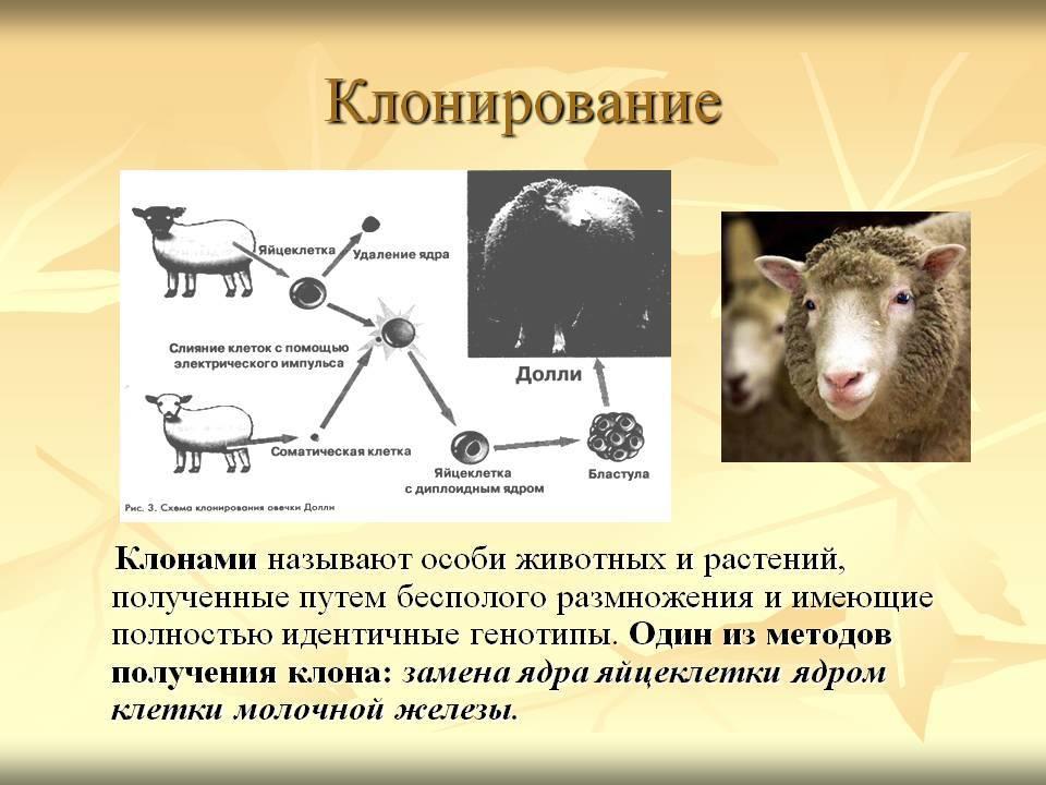 Клонирование животных и растений
