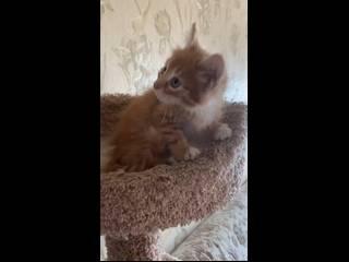 Стерилизация кошки (часто задаваемые вопросы, faq)