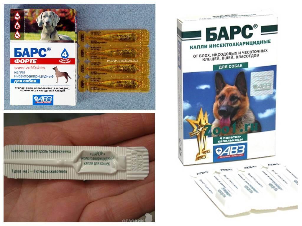 Барс форте капли для котят - купить, цена и аналоги, инструкция по применению, отзывы в интернет ветаптеке добропесик