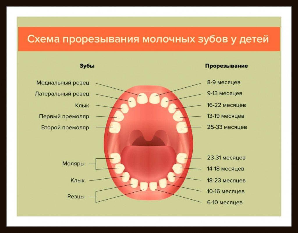 У кошки выпал зуб: основные симптомы и варианты лечения