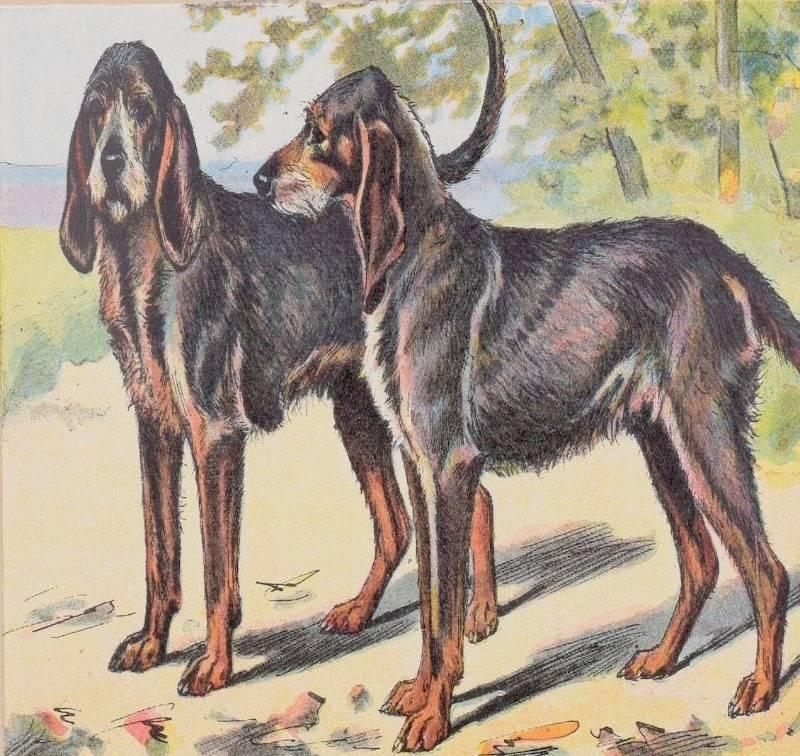 Породы собак, которых больше не существует | stena.ee