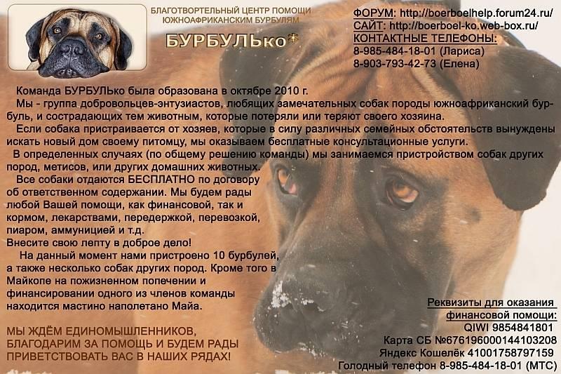 Бурбуль собака. описание, особенности, уход и цена породы бурбуль | sobakagav.ru
