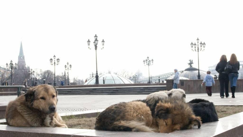 6 способов как помочь бездомным собакам, не подбирая всех домой