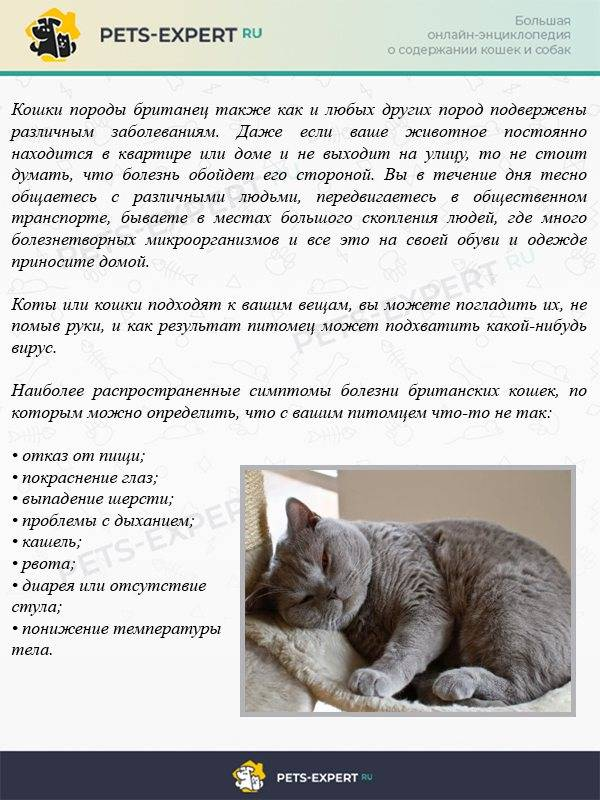 Лечение гингивита у кошек – эффективные методы