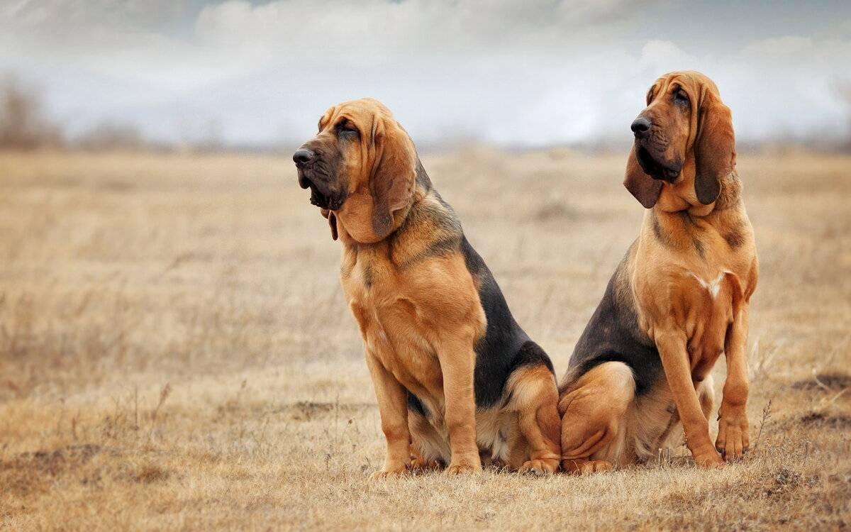Добрые породы собак. описание, особенности, названия и фото добрых пород собак | животный мир
