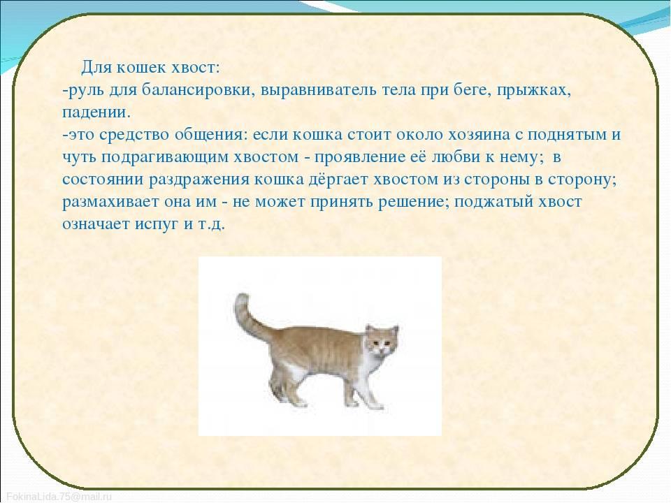 8 фактов о кошачьих хвостах: описание и инфографика
