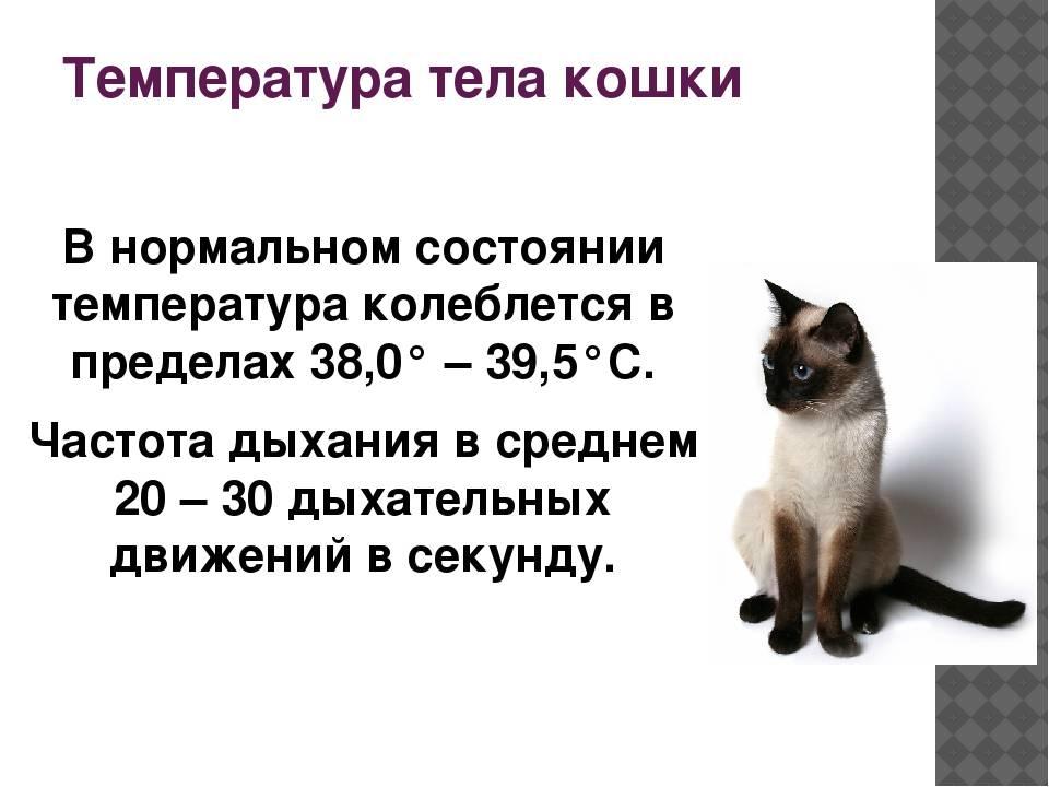 Признаки хорошего кошачьего здоровья