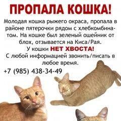 Как найти кошку или собаку, если они потерялись