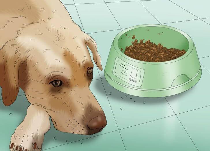 Собаку вырвало после еды