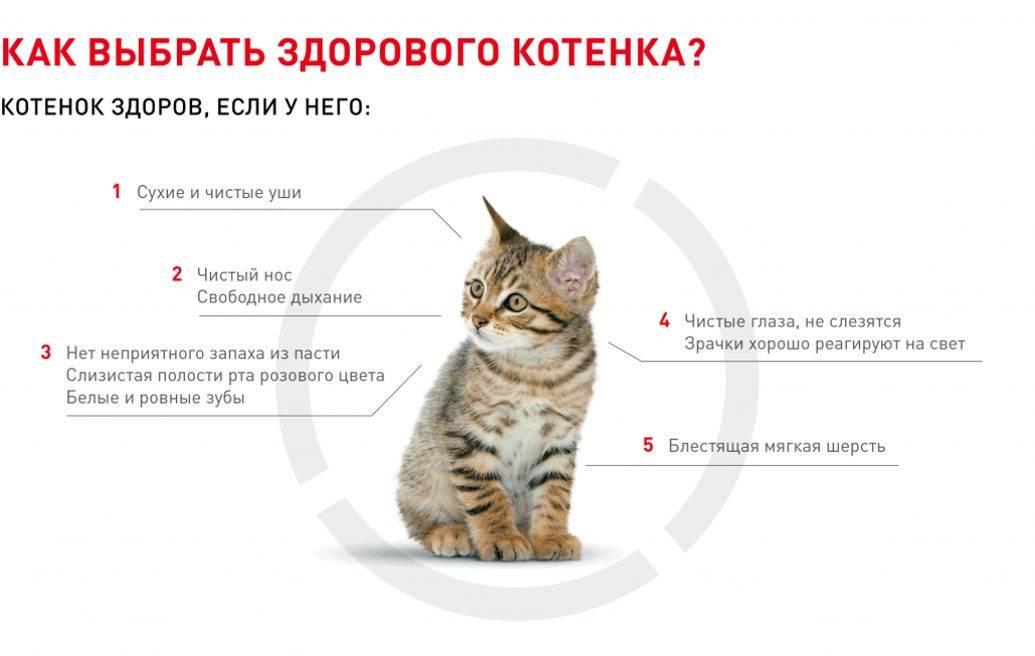 Что купить котенку в первую очередь полная инструкция
