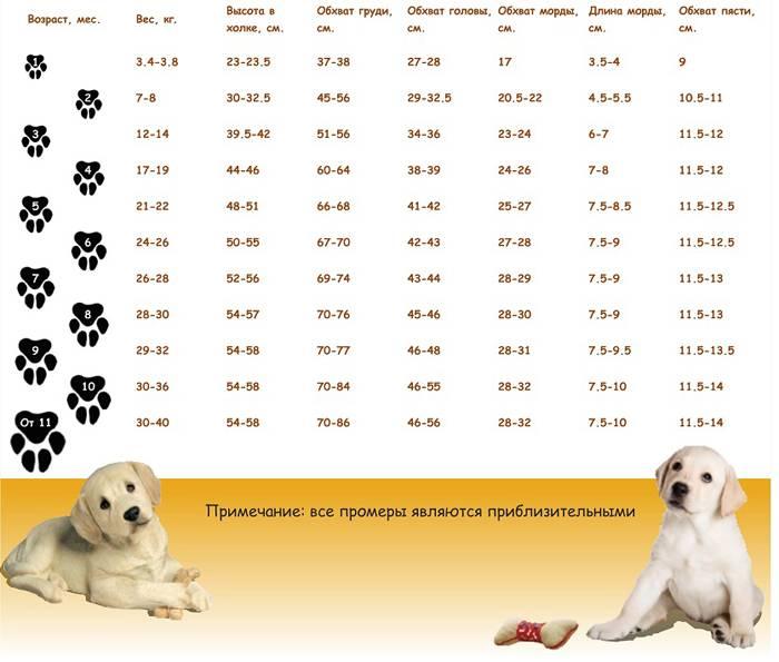 До какого возраста растут собаки - мелких, средних и крупных пород - домашние наши друзья