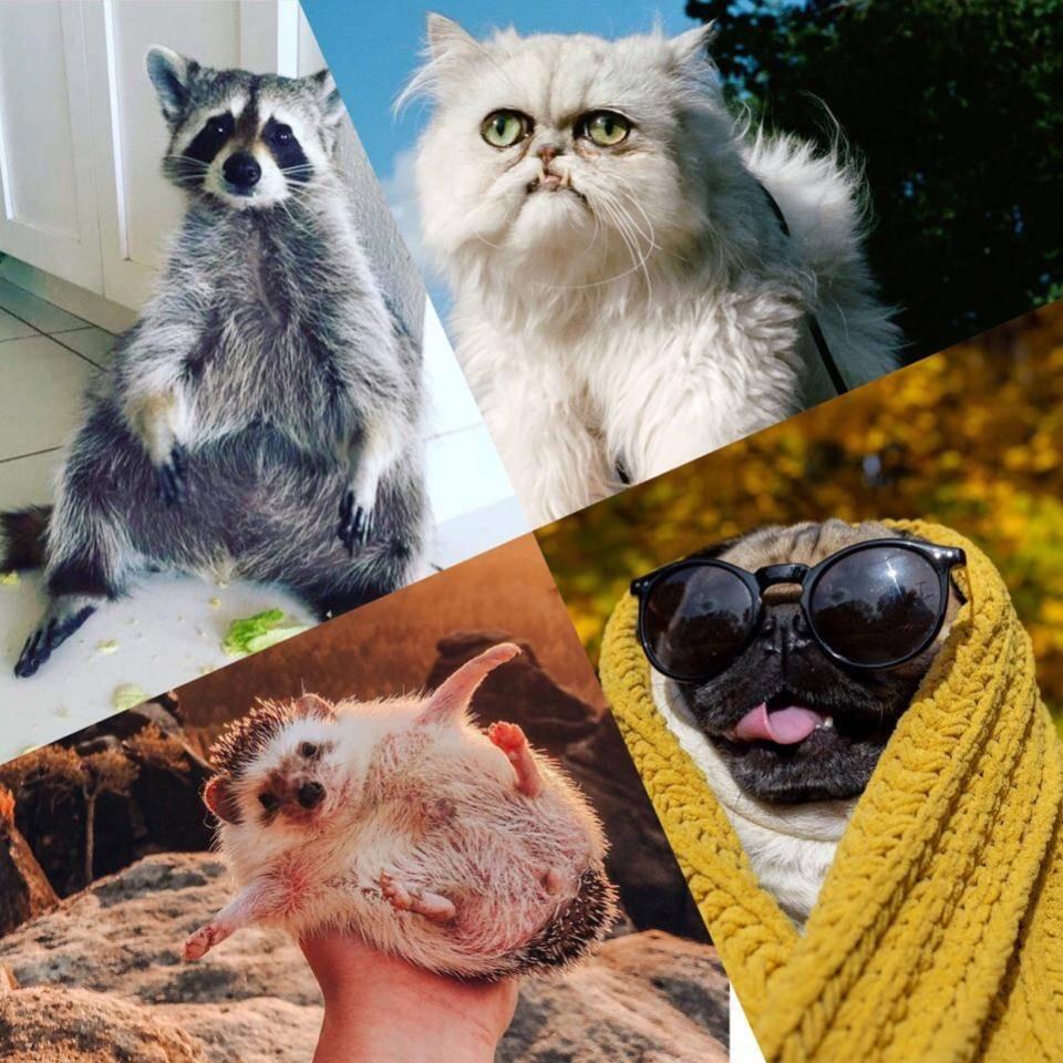 У нас лапки: топ-10 самых знаменитых котов с аккаунтами в русском instagram