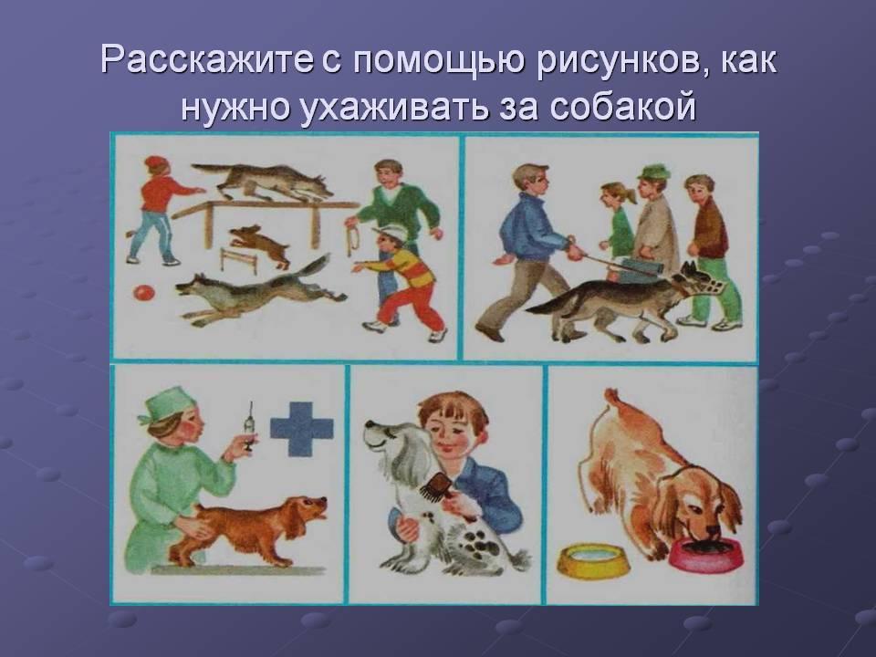 Уход за щенком — правила воспитания