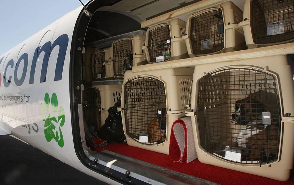 Переноска для собак в самолет: размеры