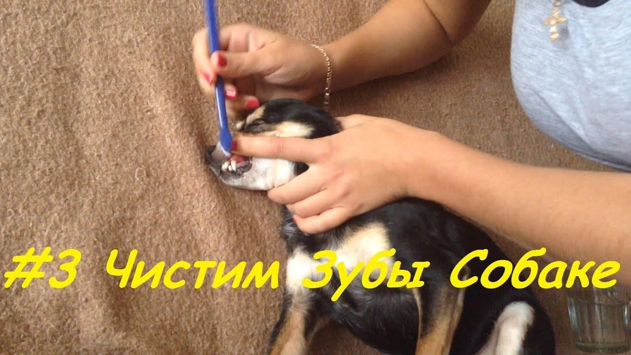 Как чистить зубы собаке